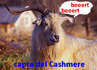 capra1.jpg